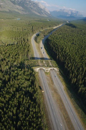 Aerial View of Banff Wildlife Crossings