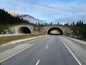 Migration bridge through bus windshield