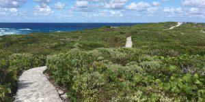 Blue Horizon Path to Overlook
